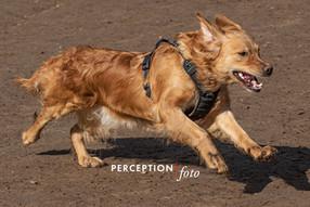 Dog Park 03-08-20 2020-03-08 198.jpg