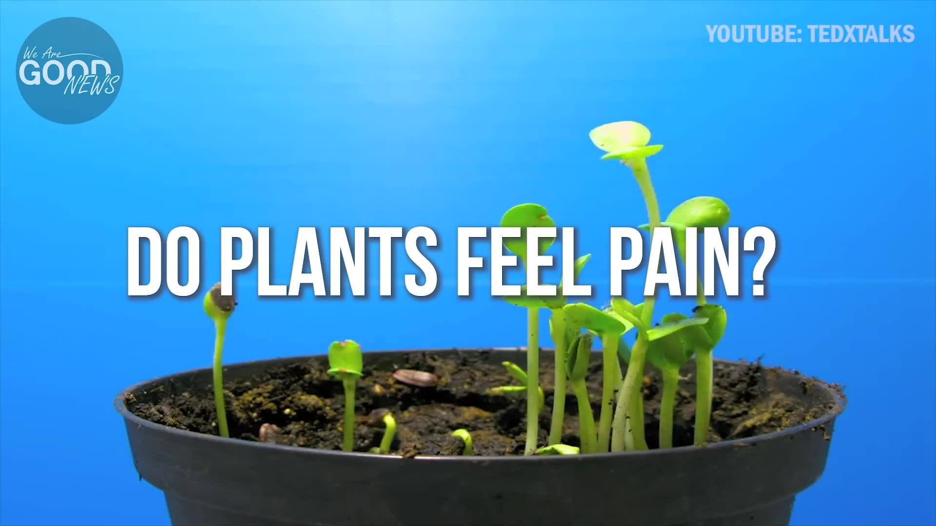 Can Plants Feel Pain?