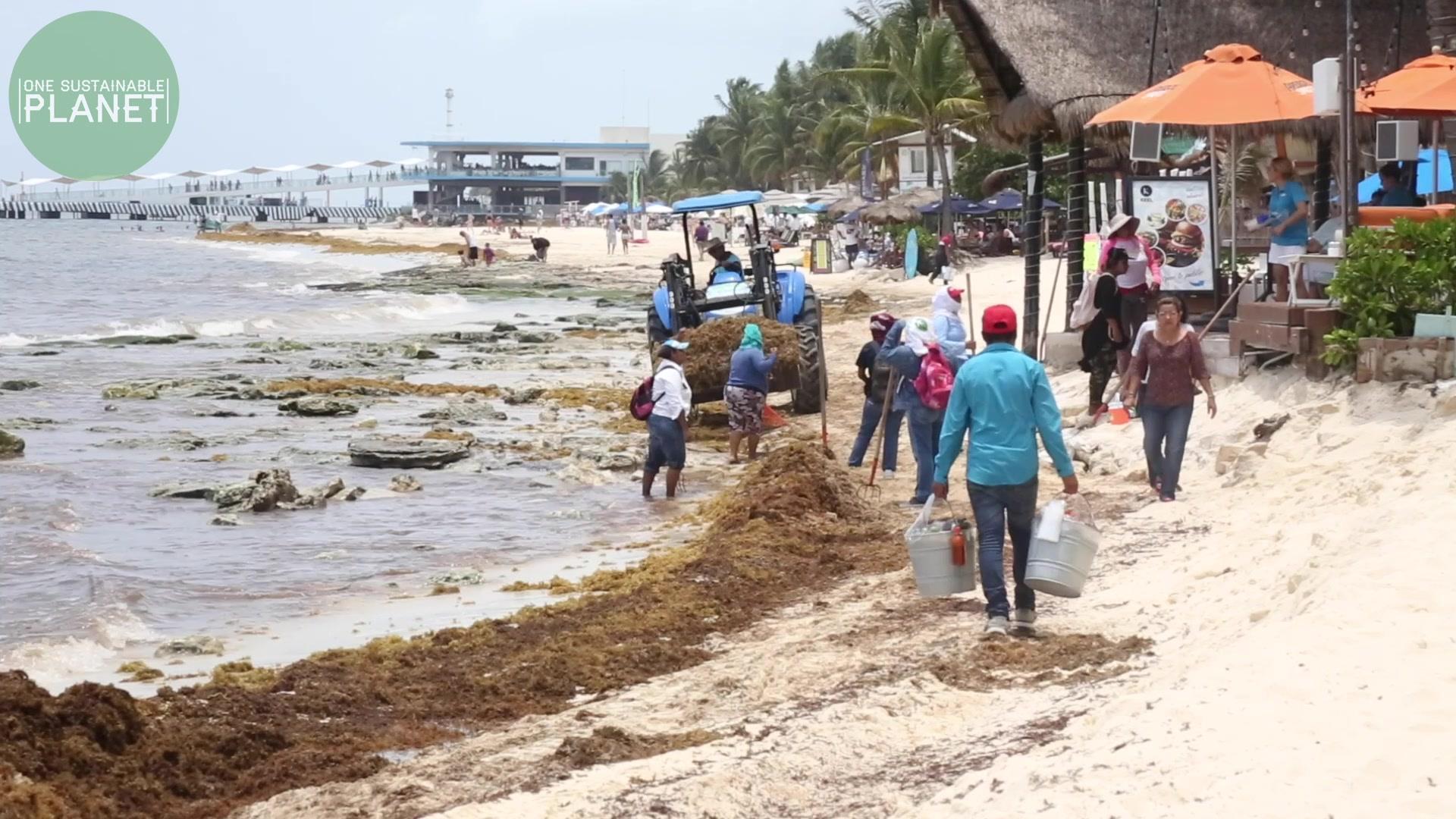 Sargassum Seaweed Invasion in the Caribbean