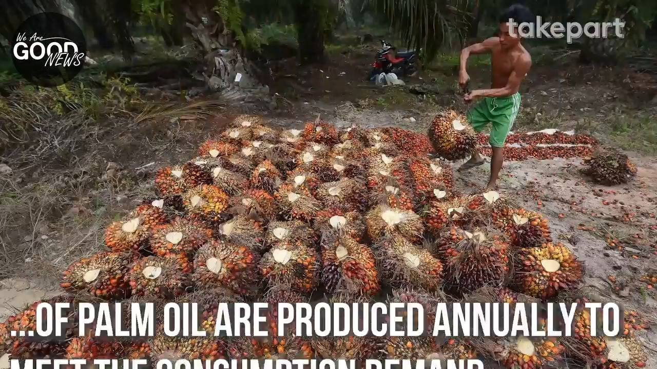 5 Ways To Replace Palm Oil