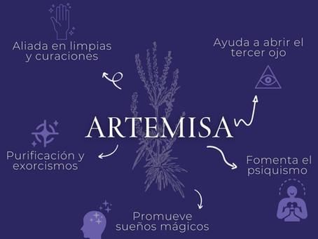Usos mágicos de la Artemisa.