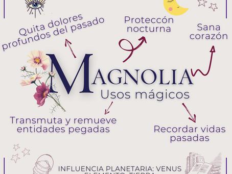 Magnolia - Usos mágicos