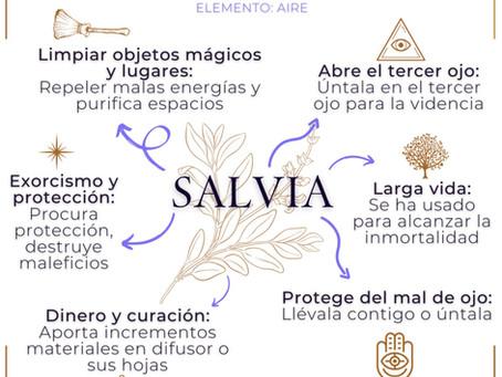 Salvia. Usos mágicos