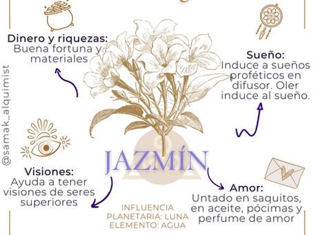 Usos mágicos del Jazmín.