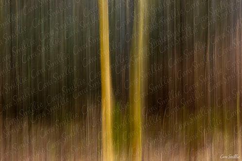 Woodland Trees ICM Print