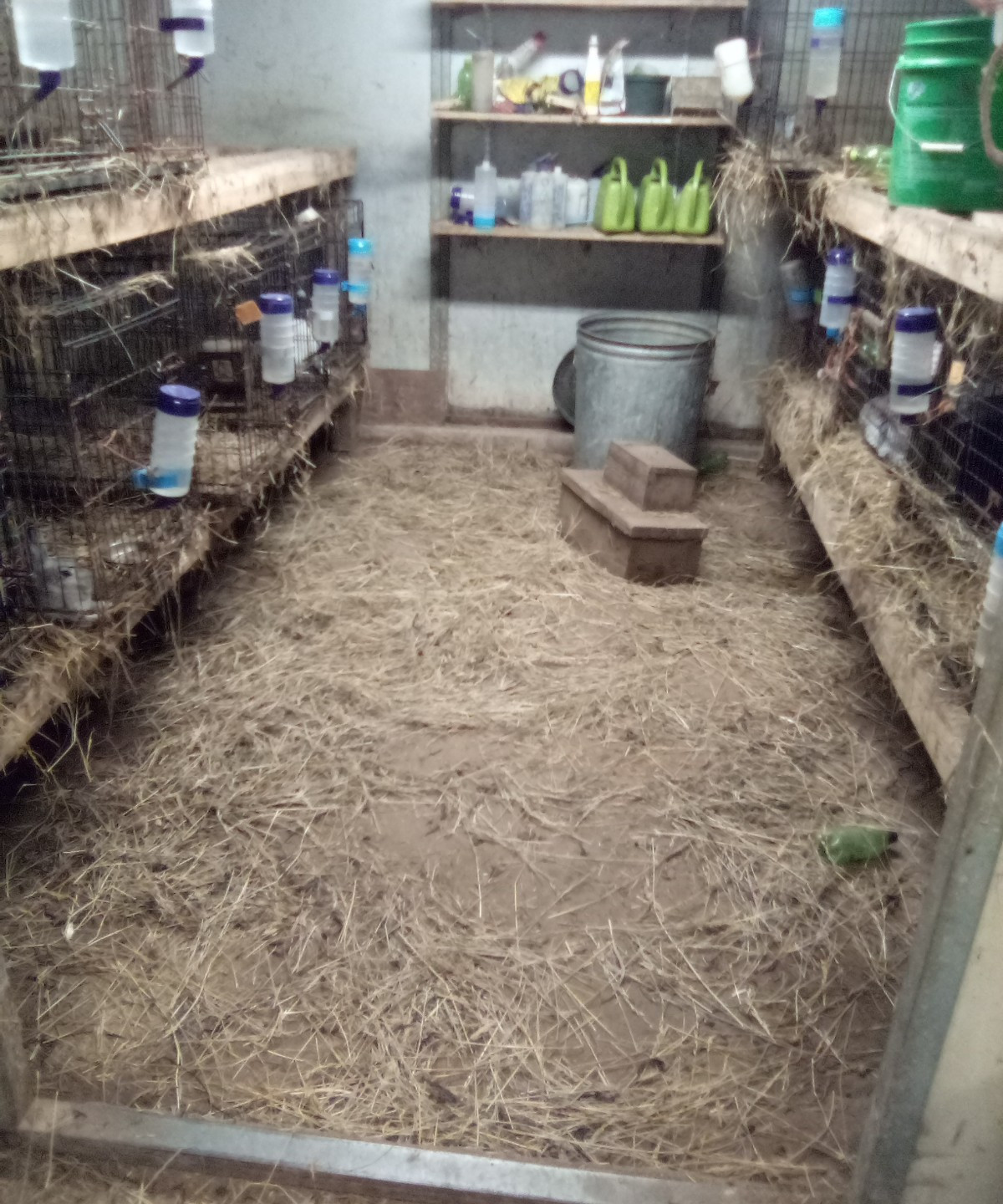 All bunny room unswept, hay everywhere and top to food left off