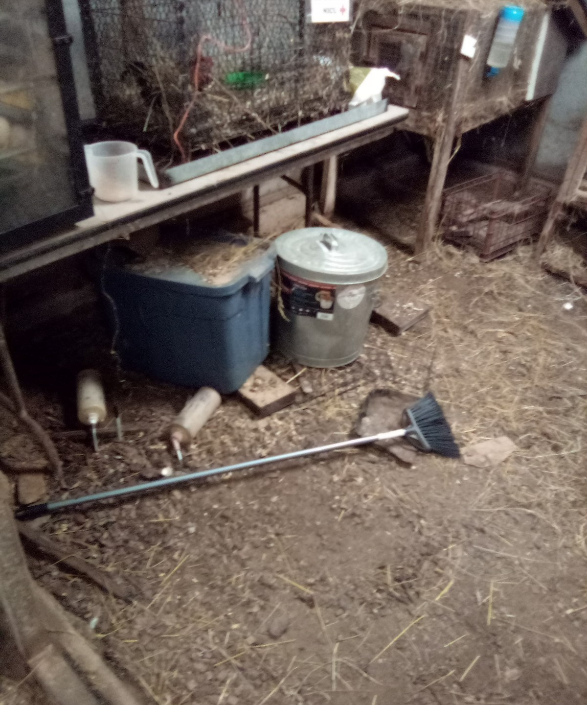 Broom and bunny bottle left on the ground to be stepped on, horse measuring cup not with horse feed