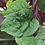 Thumbnail: Spinach - Malabar Red Stem