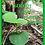 Thumbnail: Gourd - Bushel