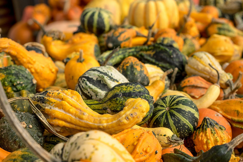 Gourd - Small Mixed