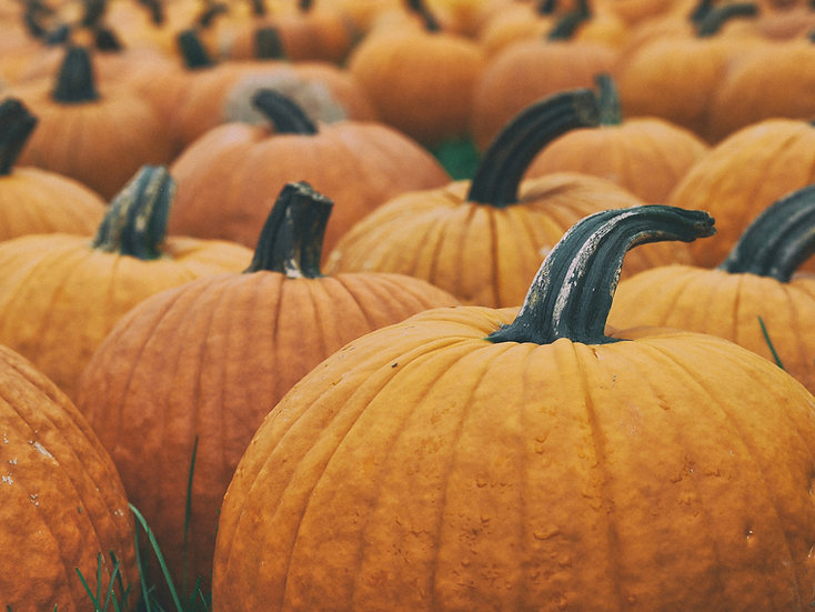 Pumpkin - Big Max