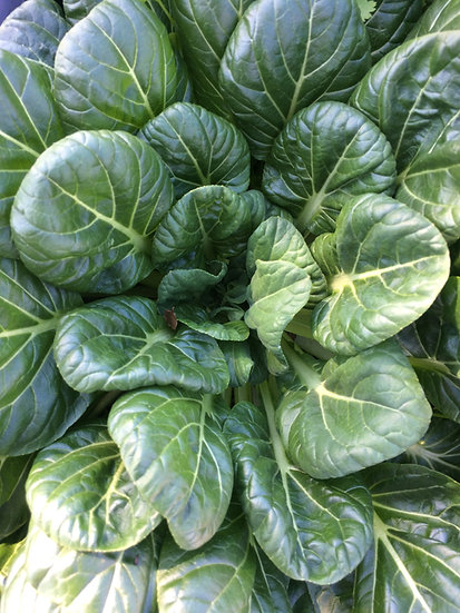 Tatsoi-Asian Spinach (Southern Acclimated)
