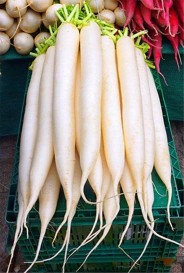 Radish - White Icicle