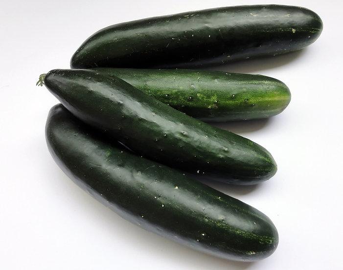 Cucumber-Marketmore 76