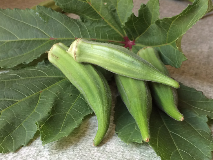 Okra - Cow Horn (Southern Acclimated)