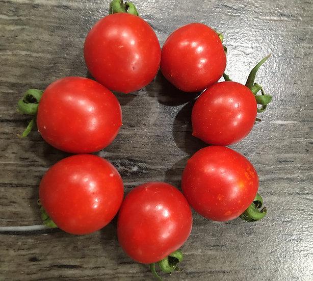 Tomato - Principie Borghese (Southern Acclimated)