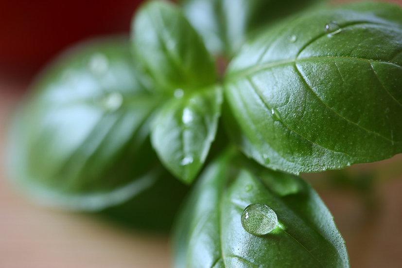 Herb - Basil, Genovese (Sweet)