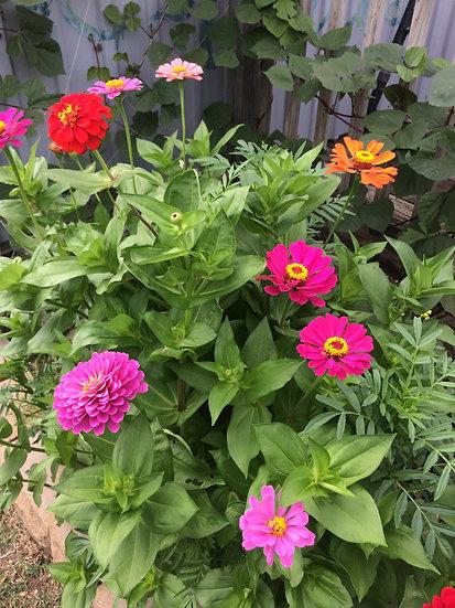 Cut Flower Medley