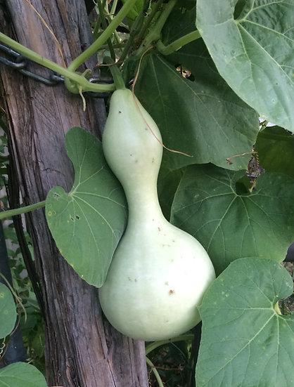 Gourd - Birdhouse Bottle