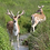 Thumbnail: Wildflower - Deer Resistant Mix