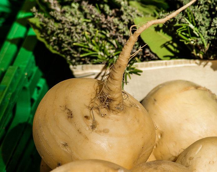 Turnip - Golden Ball