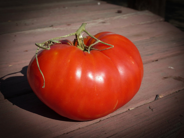 Tomato - Italian Heirloom (Southern Acclimated)