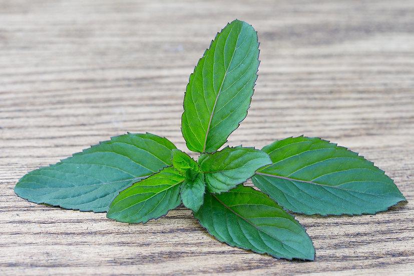 Herb - Basil, Thai