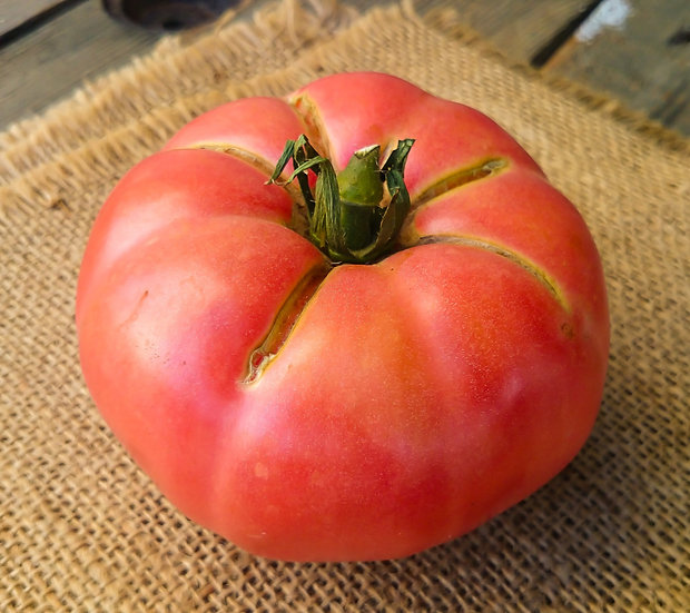 Tomato - Brandywine (Pink)