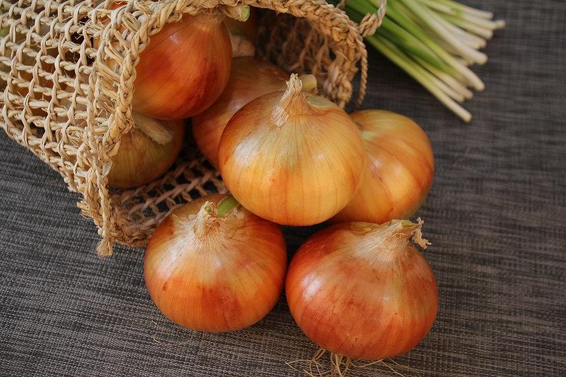 Onion - Yellow Sweet Spanish Utah Jumbo