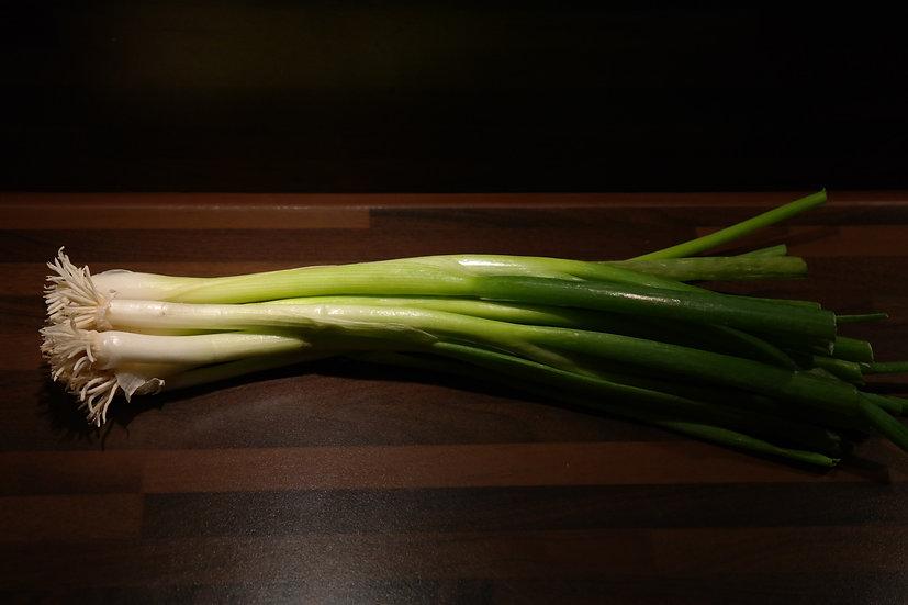 Onion -Tokyo Long White  Bunching