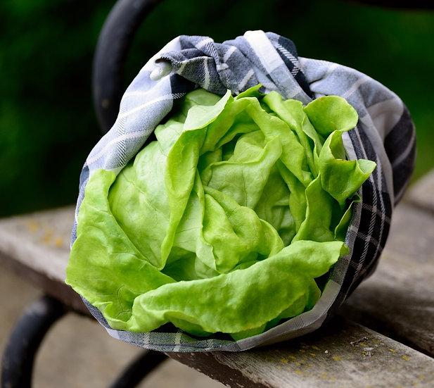 Lettuce - Bibb, Butterhead
