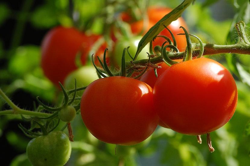 Tomato - Chadwick Cherry
