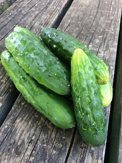 Cucumber-Marketmore 76  (Southern Acclimated)