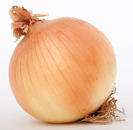 Onion - Texas Grano 1015Y