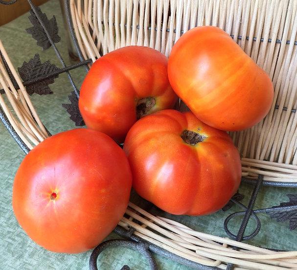 Tomato - Marglobe (Southern Acclimated)