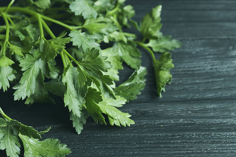 Herb - Parsley, Italian Flat Leaf (Southern Acclimated)