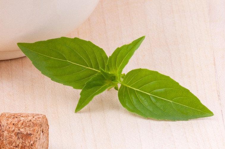 Herb - Basil, Lemon