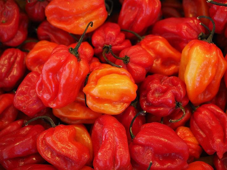 Pepper - Habanero, Caribbean Red