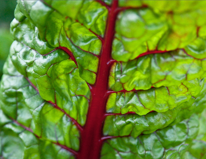 Swiss Chard - Ruby Red