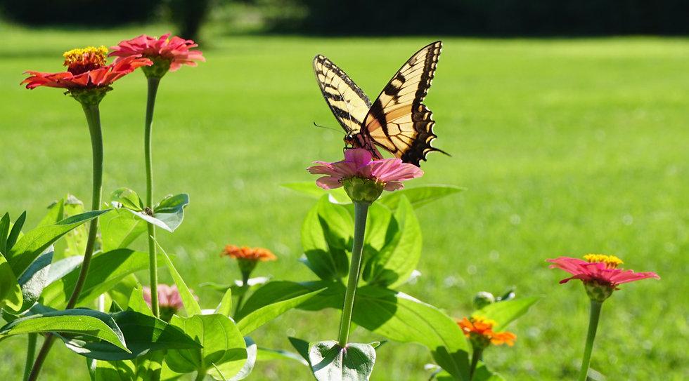Wildflower - Butterfly & Hummingbird Mix