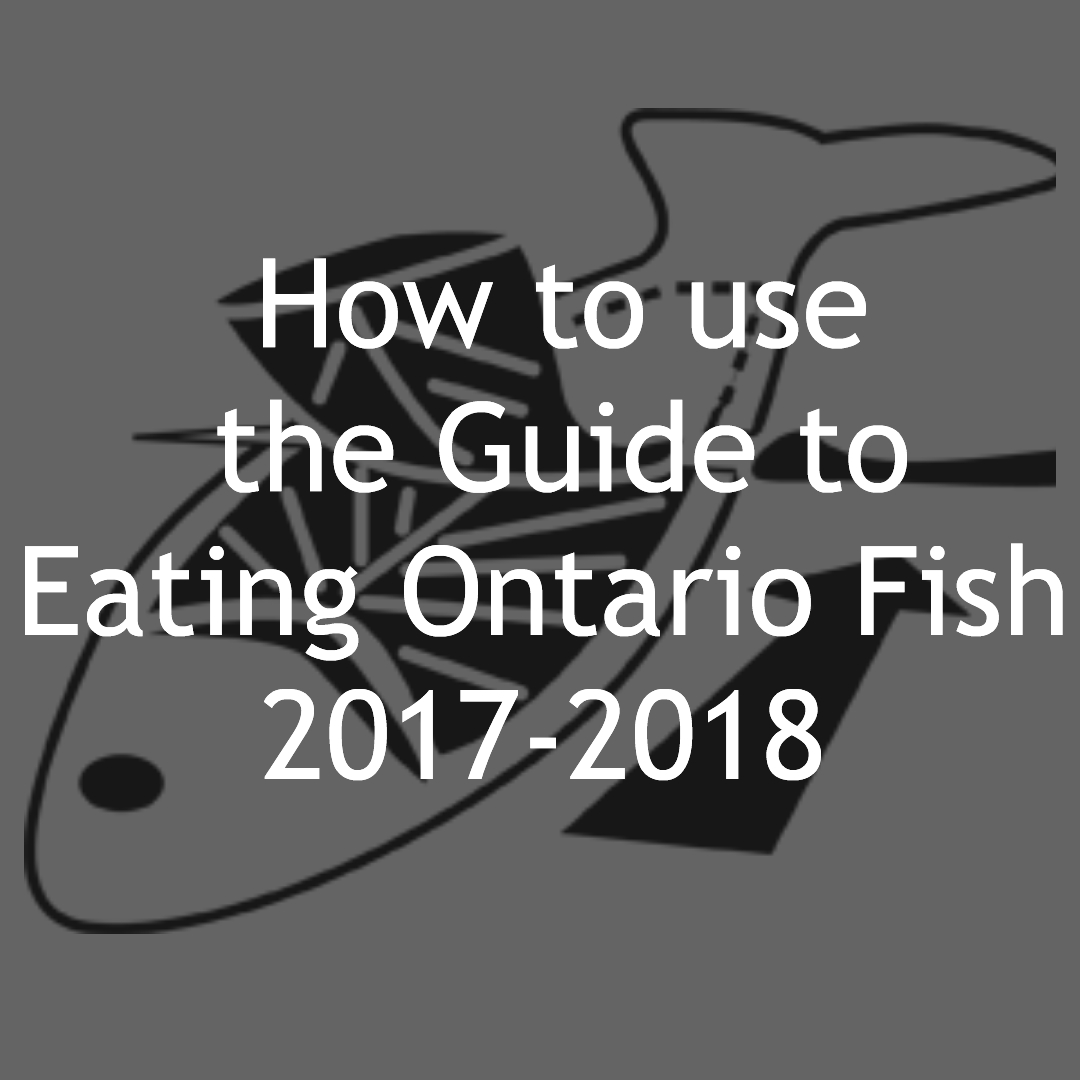 HOW TO: EATING ONTARIO FISH