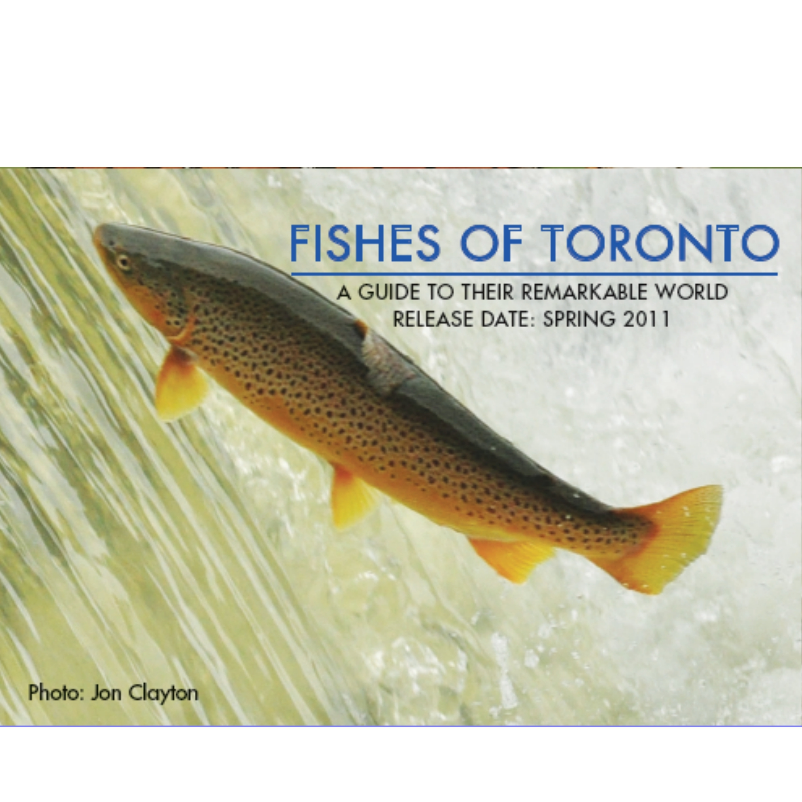 FISHES OF TORONTO PT.1