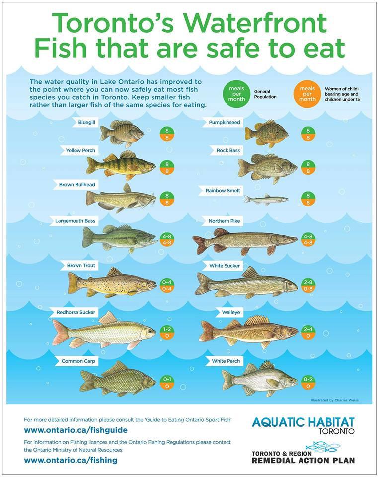 TORONTO'S FISH SAFE TO EAT