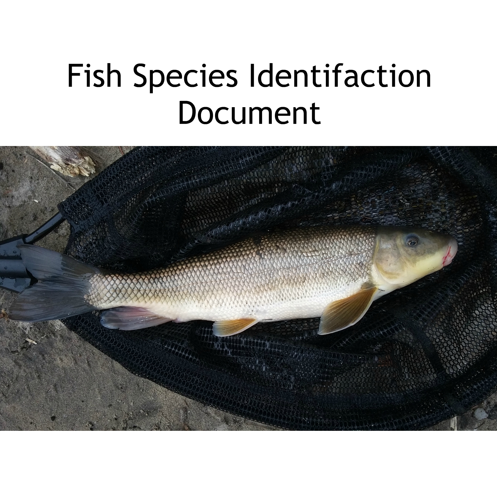 SPECIES IDENTIFICATION DOCUMENT