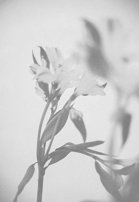 Lightroom-52.jpg