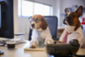 Investment Opportunity Dog Day Care Centre