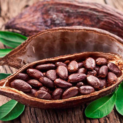 seleccion-cacao01.jpg