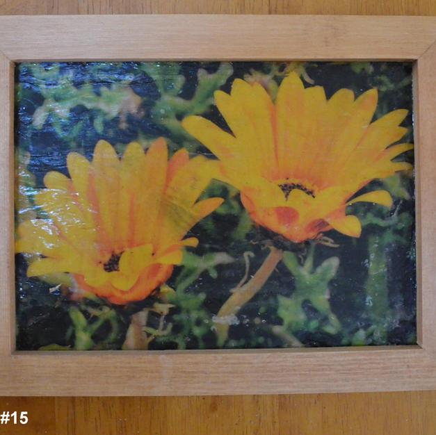 Yellow Daisy - $10