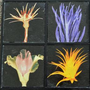 Flower Montage - $12