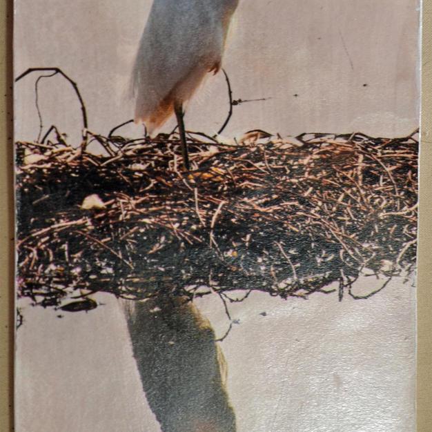 Snowy Egret - $10